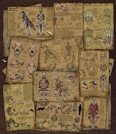 Werewolf Anatomy by Nashoba-Hostina.deviantart.com on @DeviantArt