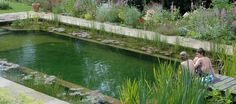 Mother Earth News advises that, in order to keep the water in a green pool clean without the need for additional sterilization, the pool needs to be pretty evenly split between plantings and swimming area. Low walls, a few inches below the surface of the water, keep the plants separate from the swimming part of the pool.