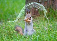 ...this squirrel popping a bubble.