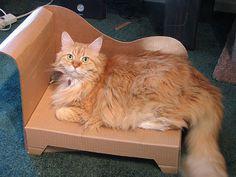 DIY Pet Furniture: Cardboard Cat Chaise