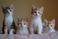 The lovejoys, day two by *lalalaurie, via Flickr
