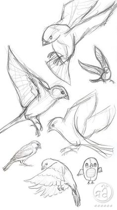 rotkehlchen-ausmalbild | coloring 3 | ausmalbilder vögel