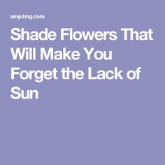 Shade Flowers That Will Make You Forget the Lack of Sun