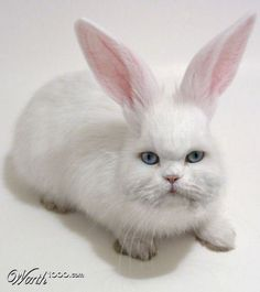 Cat Bunny Hybrid Animals Has Science Gone Too Far Visit For More