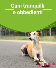 Cani tranquilli e obbedienti   Nel seguente articolo #conoscerete tutto su quei cani tranquilli e #obbedienti, ideali per stare in spazi piccoli o grandi e per convivere con la vostra #famiglia. #Addestramento