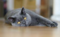 Кошки фото. Галерея красивых фотографий котов, кошек и котят