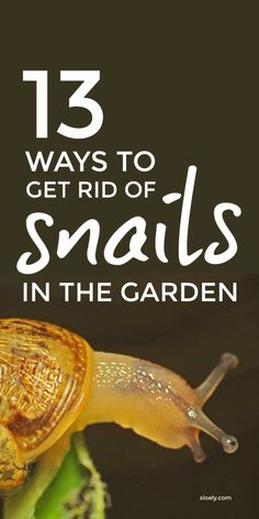 Learn how to get rid of snails in gardens and yards. Use these DIY pet safe tips, including simple beer traps, to get rid of slugs and snails and repel slugs and snails from flower beds, vegetable seedlings and hostas. #getridofslugs #slugrepellent #slugs #slugcontrol #snailcontrol Slugs In Garden, Snails In Garden, Garden Pests, Organic Gardening Tips, Flower Gardening, Vegetable Gardening, Container Gardening, Repel Slugs, Getting Rid Of Slugs