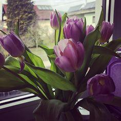 Wir wünschen euch einen schönen frühlingshaften Sonntag!   #sonntag #sunday #tulpen #flowers #blumen #sundaysarethebest Plants, Instagram, Tulips, Sunday, Plant, Planets