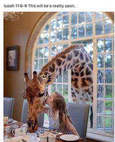 Life In Paradise, Jw Humor, Giraffe, Travel Photography, Lion Sculpture, Wildlife Tourism, Jehovah, Kenya, Plane