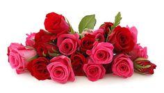 gambar-bunga-mawar-merah-6.jpg (663×382)