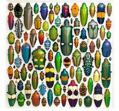 beetle mosaic art work by Christopher Marley