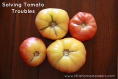 It's almost time to grow tomatoes!  Here's some good tips for making sure your harvest is abundant.