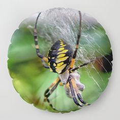 just in time for Halloween, a banana spider<br/>  <br/>  banana, spider, arachnid, scott, hervieux, photography, bug