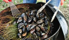Pine Bough-Roasted Mussels