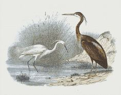 Egret and Heron Counted Cross Stitch Pattern, Edouard Travies, Instant Digital Download Cross Stitch Chart, Needlework Pattern, Embroidery
