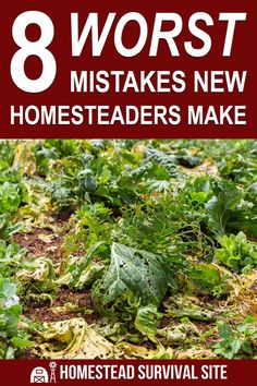 If you're new to homesteading, you should know that there are several critical homesteading mistakes that are very easy to make. Old Fashioned Recipes, Homestead Survival, Small Farm, Country Living, Gardening Tips, Mistakes, Homesteading, Country Life, Outdoor Life
