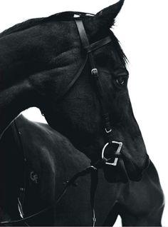 BW black english | cheval noir