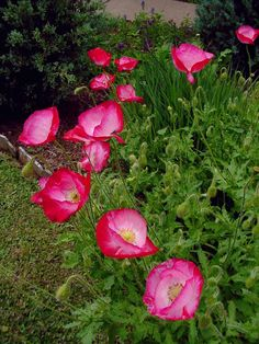 Donald's Organic Texas Garden: GARDEN VIEWS