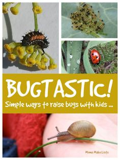Bug fun with kids ... simple fun ways to raise bugs with your kids