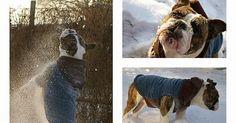 Boston Terrier Hund Hunde Hunderasse Pfo Schlüsselanhänger Schlüsselband Lanyard