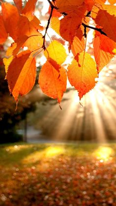 Sunshine-From-Leaves-Autumun-iPhone-Wallpaper
