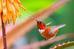 It's a magical moment when a hummingbird stops by your backyard. Here are just a few of those amazing moments captured on camera.