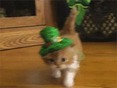 This is just so cute!! The 12 Stages of St. Patrick's Day | Her Campus