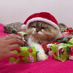 Do not touch my Christmas presents! http://ift.tt/2ky2FBt cute puppies cats animals