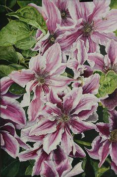 Summertime Finery - Clematis by Helen Shideler Watercolor ~ 33 x 25