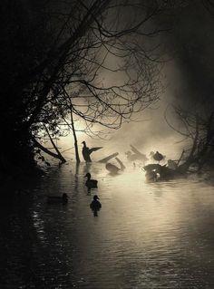 Helen Cherry, misty sunrise at the lake
