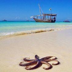 Traumhaftes Meerwasser auf Sansibar Mehr zu den Themen Reisen & Urlaub findest du auf unseren Boards!