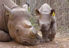 black_rhino_jo_benn. Increase protections for wildlife rangers so they can defend against dangerous poachers and better protect endangered animals. As illegal poachers become increasingly desperate and violent, wildlife rangers put their lives on the line every day to protect threatened and endangered species.