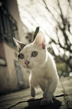 """""""If homeless cats could talk, they would probably say give me shelter, food, companionship, and love, and I'll be yours forever."""" --Susan Easterly"""