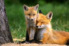 Mother And Cub III by Sagittor on deviantART  //  http://sagittor.deviantart.com/art/Mother-And-Cub-III-178808936
