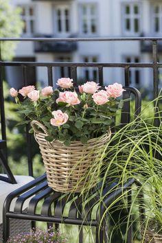 Romantiske potteroser i kurv gir et koselig uttrykk på balkongen.