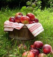 Make homemade apple wine from frozen apples