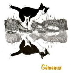 Gemini kitty x2!