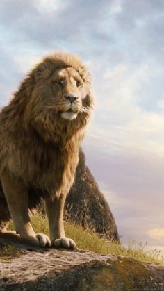 Download Aslan Wallpapers To Your Cell Phone Christ Narnia