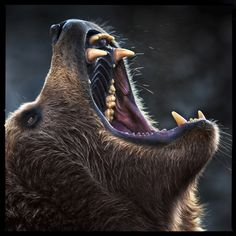 The roar of a bear by Michael Rønsdorf on Bear Photos, Bear Pictures, Wildlife Photography, Animal Photography, Ours Grizzly, Bear Tattoos, Ship Tattoos, Arrow Tattoos, Word Tattoos