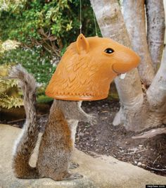 big head squirrel feeder, for when you want to both nurture and humiliate squirrels.