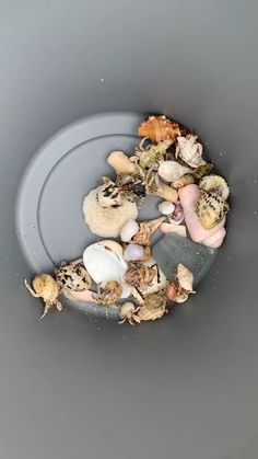 Hermit crabs are the real estate agents of the animal world.
