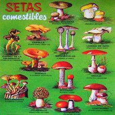 Setas comestibles.