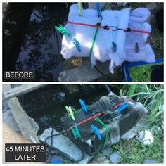 How to clean a pond without draining it or adding any chemicals. See how thousands of pond owners have made their water clear again. Natural Swimming Ponds, Natural Pond, Fish Pond Gardens, Garden Pond, Backyard Water Feature, Ponds Backyard, Pond Cleaning, Pond Maintenance, Rock Fountain