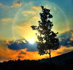 Sunlight tree gorgeous photography awesome pretty cool