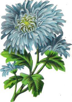 Oblaten Glanzbild scrap die cut chromo Blume 12cm flower Dahlie fleur: