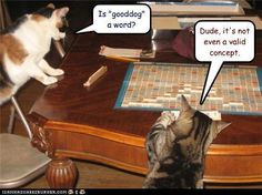 """That word """"dog"""" ....  Just another quiet evening at home with the kitties playing Scrabble..."""