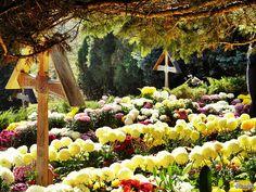 La capătul lumii, la mormântul Părintelui Arsenie Boca de la Mănăstirea Prislop... Plants, Pictures, Photos, Photo Illustration, Plant, Drawings, Planting, Planets