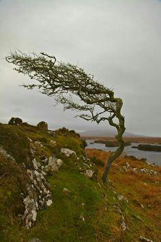 Cool Photos, Beautiful Pictures, Bonsai Styles, Patagonia, Connemara, Irish Celtic, Nature Tree, Flora And Fauna, Real People