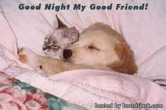 Goodnight my friend.  ♥
