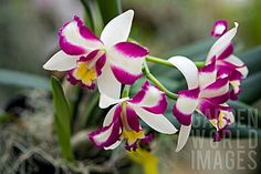 Gorgeous Orchids!